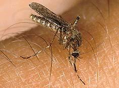http://www.klimaforschung.net/HIV-Muecke/0,1886,2496052,00.jpg