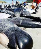 Wale stranden